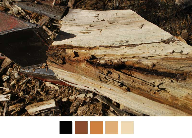 split wood shows color scheme