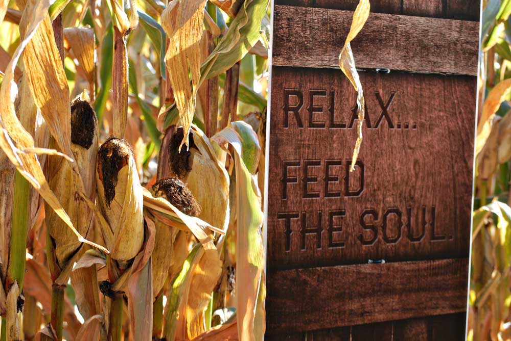 Corn maze at Fermentation Fest, Reedsburg, WI