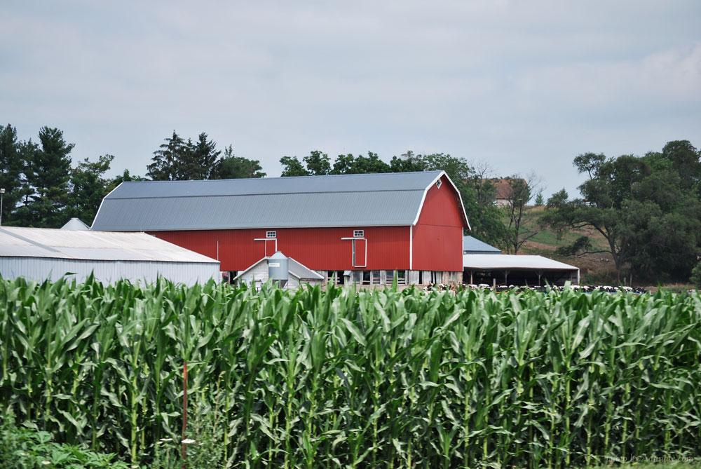 Wisconsin dairy barn