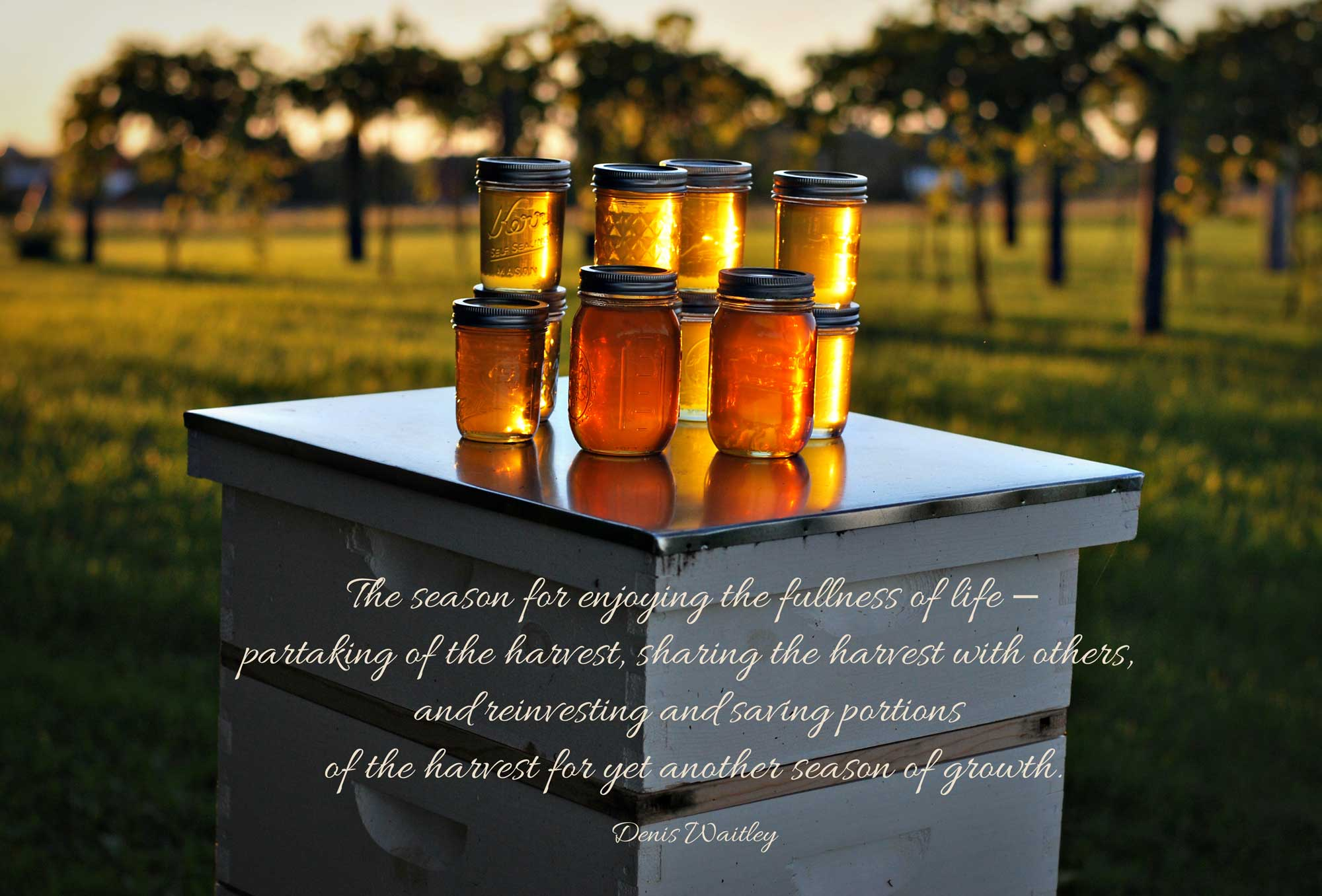 Jars of honey on beehive