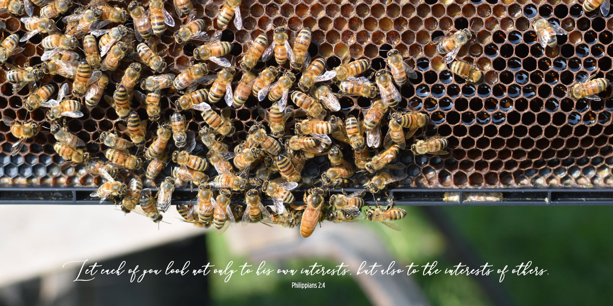 Bees Motivate Gratitude and Giving