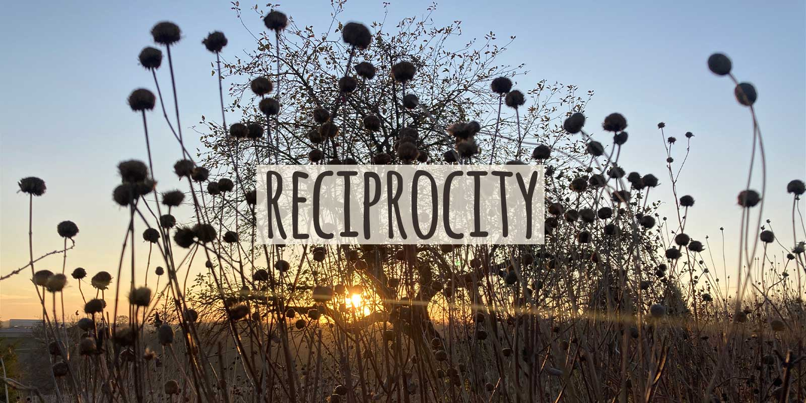 Inspired by Grassroots Reciprocity